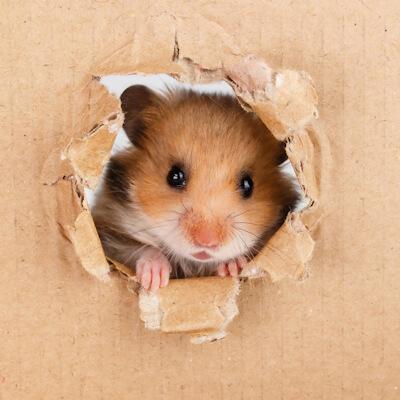 Hamsters: cancer – Bishops Stortford Vets