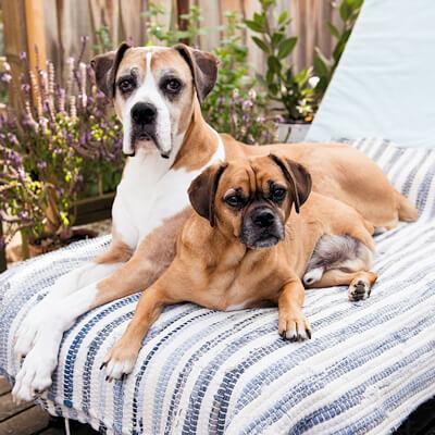 Amputee dog care – Bishops Stortford Vets